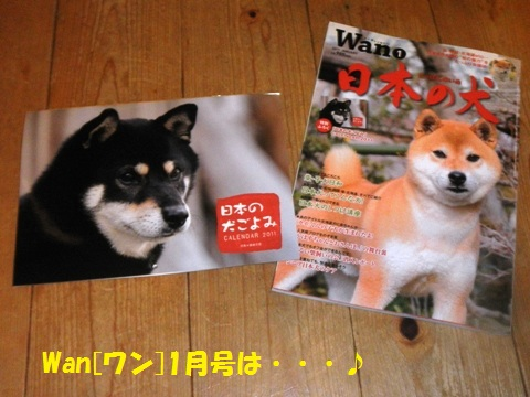 本(Wano)