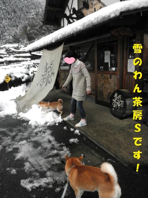 雪のわん茶で~す!