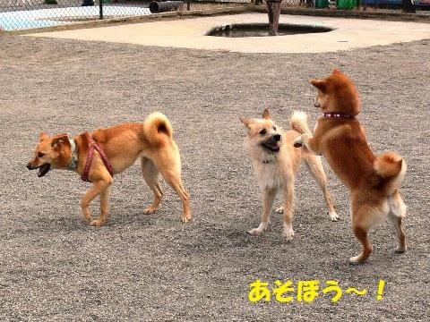 遊ぼう~~!