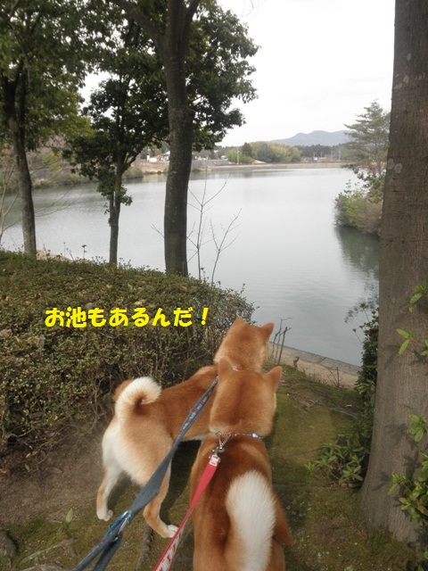 お池もあるね!