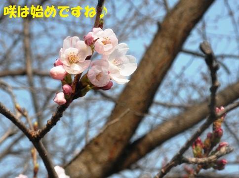 咲き始め!