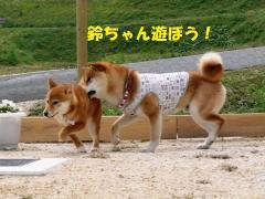 鈴ちゃん遊ぼう!