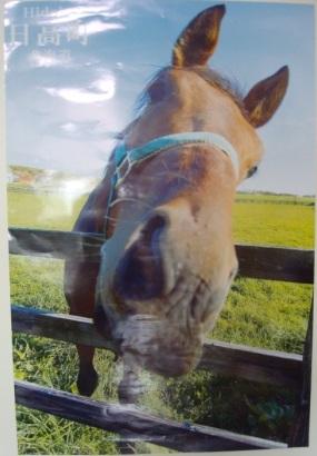 馬のポスター