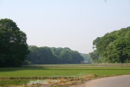 日本ではゴールデンウィーク過ぎから田植えが始まるって事実を、かなり長い間忘れてました。