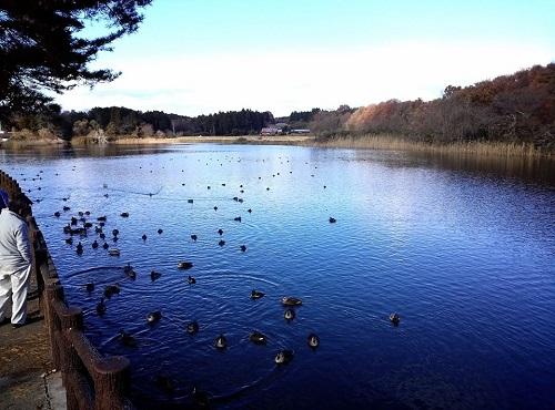 『羽田沼 野鳥公園』へ 再び!①