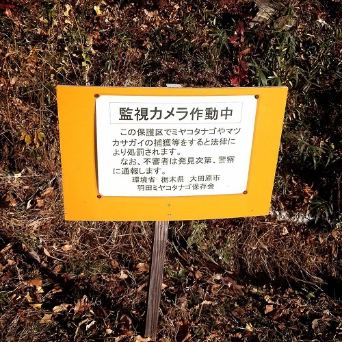 『羽田沼 野鳥公園』へ 再び!⑧