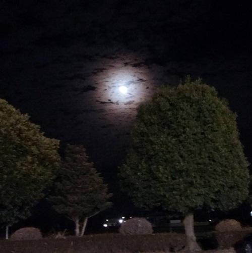 今宵も、月が美しい。