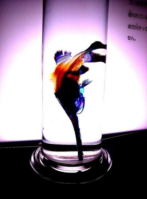 The 透明魚 with Light Acuario 2013②