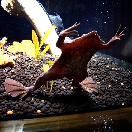 川の水族館『なかがわ水遊園』いいですよぉ!⑦