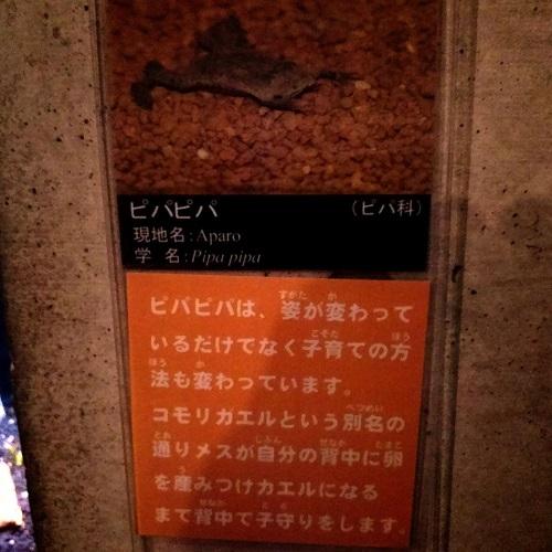 川の水族館『なかがわ水遊園』いいですよぉ!⑧