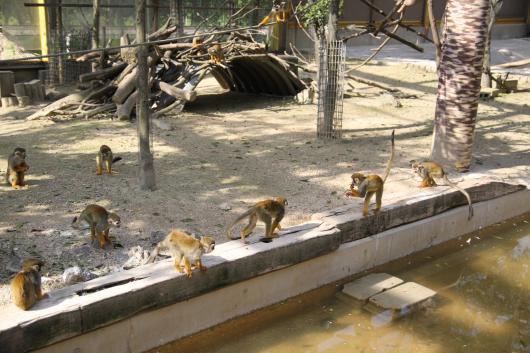 動物園15