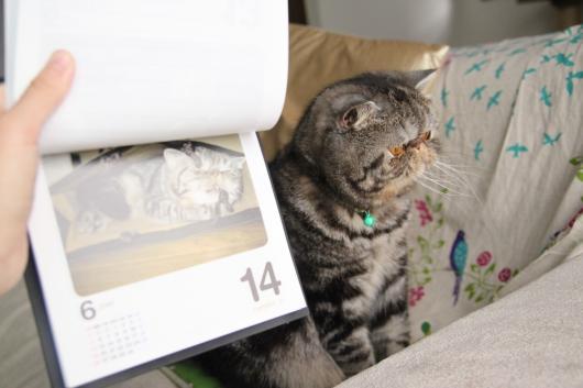 猫めくり6