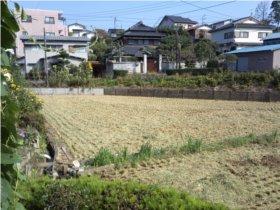 2010稲刈り2