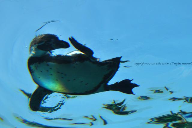 2012・6カメラ教室・旭山動物園3