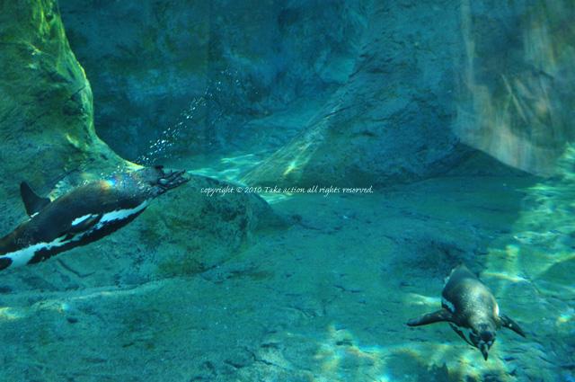 2012・6カメラ教室・旭山動物園2