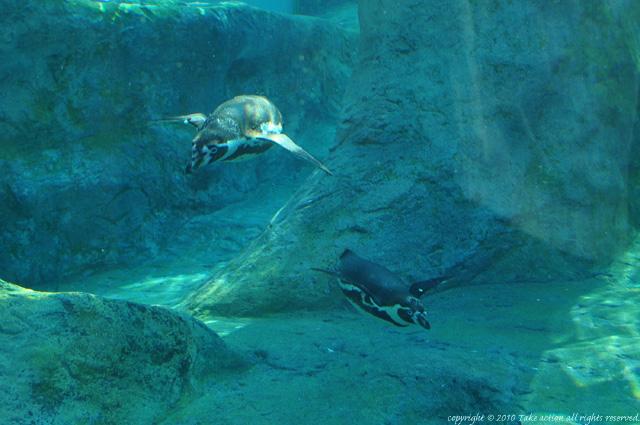 2012・6カメラ教室・旭山動物園1