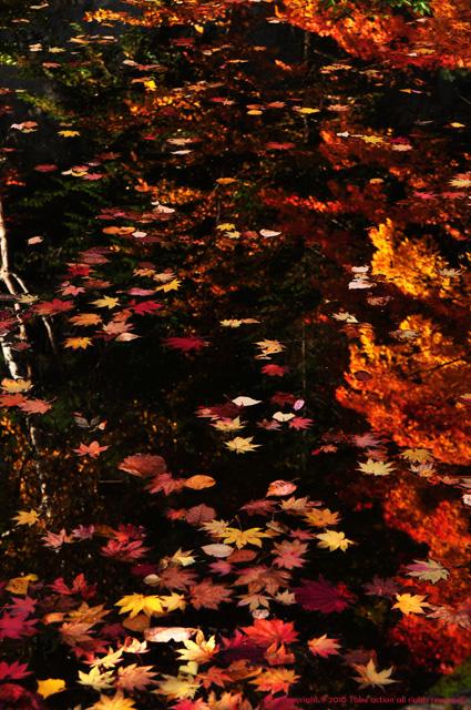 2012・10・27紅桜公園2