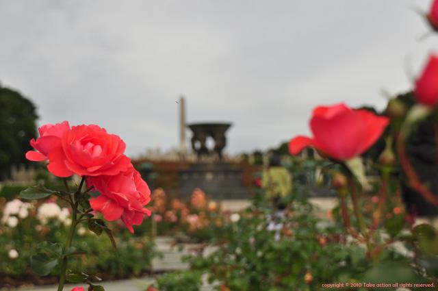 2012・9・9ヴィーゲラン公園5