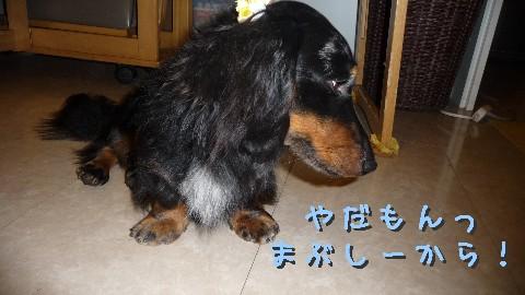 P1030279 Web 表示用 (中)