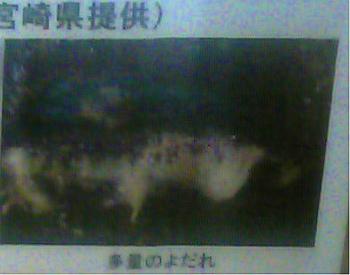 taketomi (49)