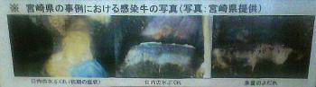 taketomi(25).jpg
