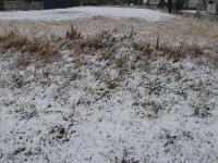 2010 2 18 雪の中のバカな親子 007_R