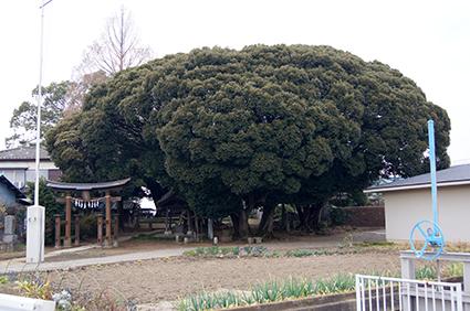 131226埼玉 多気比売神社①