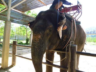 象だぞう。