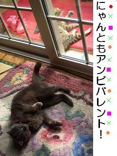 bna_20110410153911.jpg