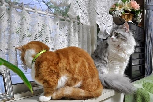 Newマンチカンのブログ「短足だってイイぢゃ~ん♪」