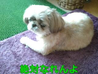 2011.9.15 福