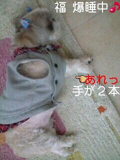 moblog_4106e493.jpg