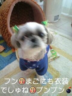 moblog_905ca7df.jpg