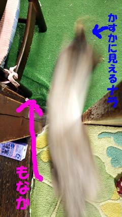 猫の二層構造