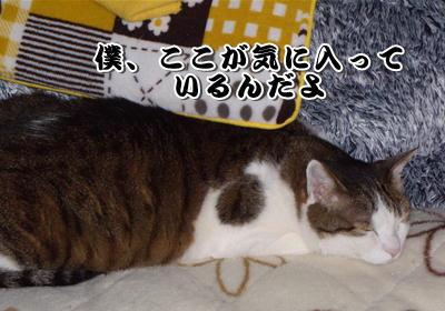 みいちゃんの寝場所-1
