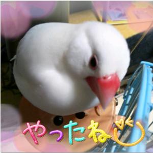 繧ュ繝」繝励メ繝」2_convert_20130330111821