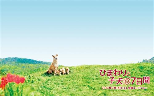himawari_wp_wide_l_R.jpg