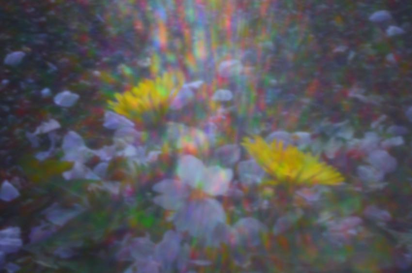 FC2_桜とタンポポ_0615