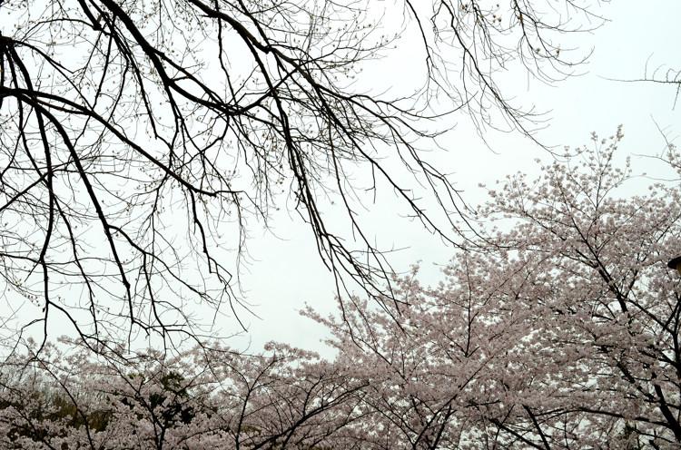 FC2_桜_0392