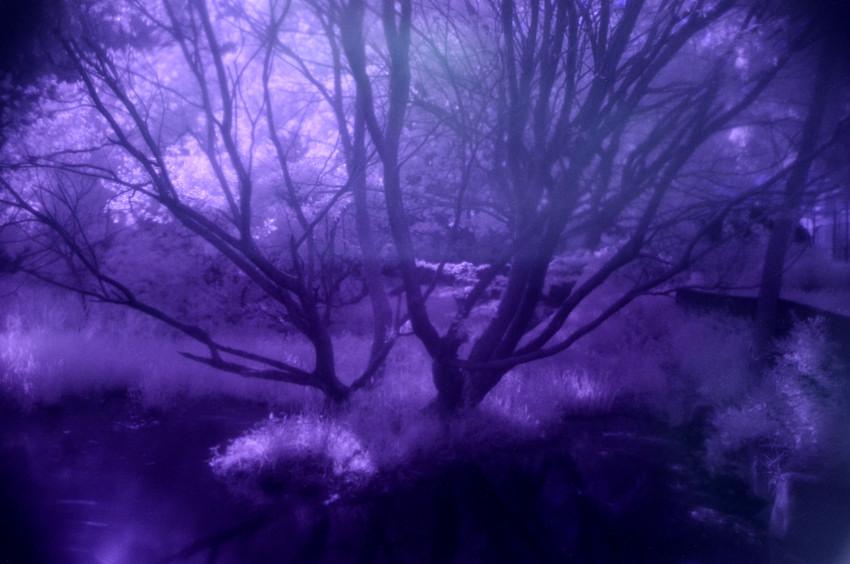 FC2_平和公園の樹_0188