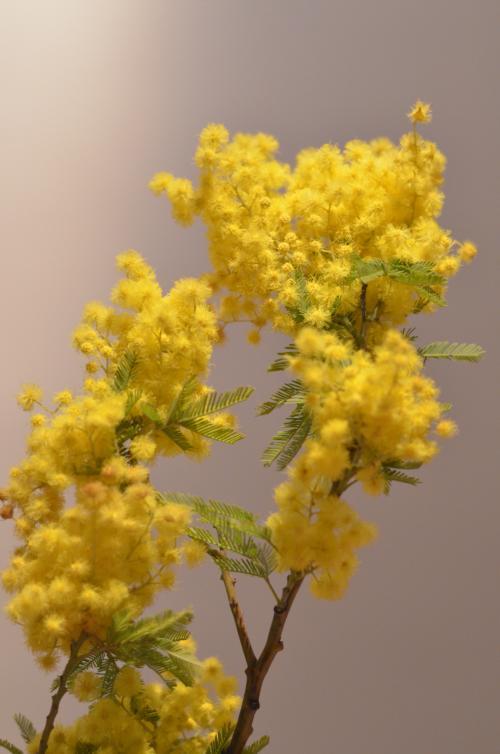 STK 0736 convert 20130309021454 - 女性の日と花売り