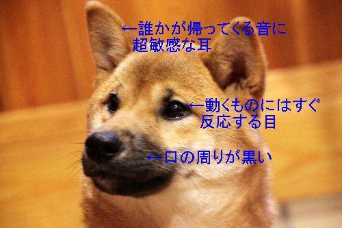 2013_01_12_07_30;_IMG_5681