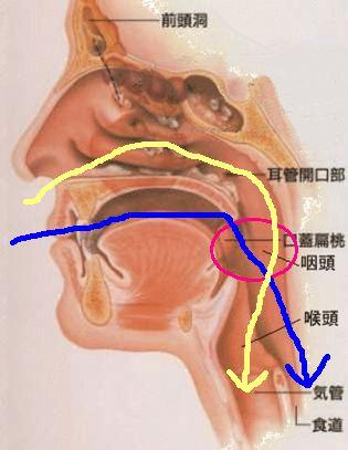 Nose-Pharynx-5.jpg