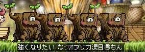 Maple111206_031130.jpg