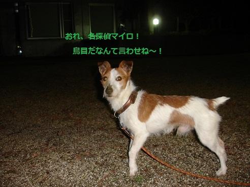 DSC02868.jpg