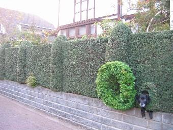 垣根とルイス