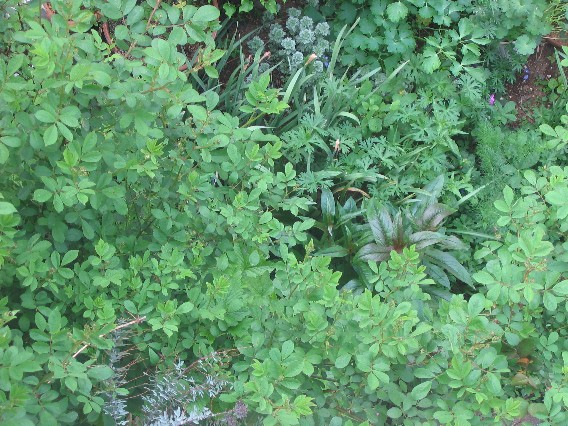 群星の足元の草花たち