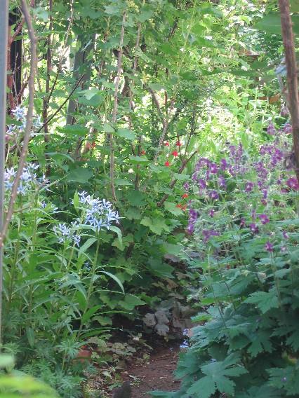 丁子草と黒花フウロ