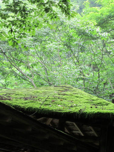 屋根の苔IMG_0001