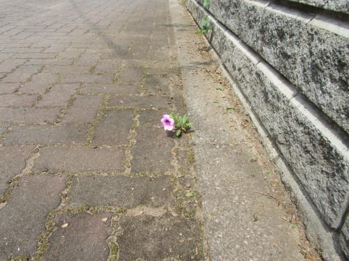 ピンク・ベインIMG_0001